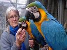 Cadou papagalii Macaw